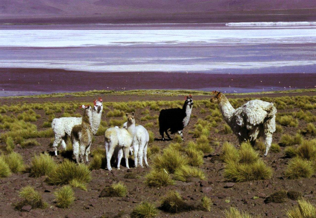Boliwia – kraj naturalnie piękny