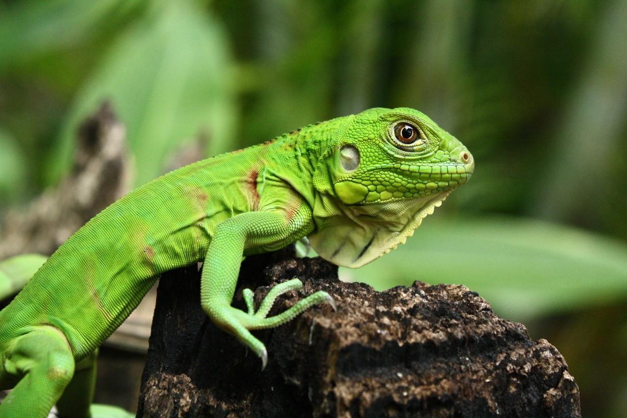 Flora i fauna Ameryki Południowej