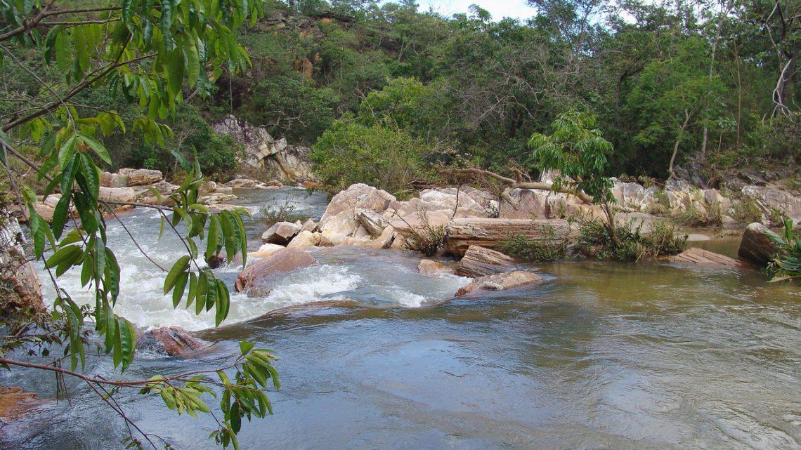 Tropikalne Lasy Amazonii jako miejsce warte obejrzenia